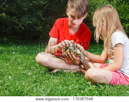 Brother and sister  wearing casual clothes  sitting on a lawn in a summer garden holding turtle