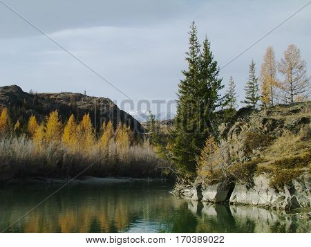 Nice view of the snow-capped mountains, the mountain river and the forest, Altay