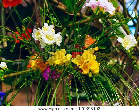 Flower holiday or birthday decoration, beautiful blooming bouquet of multicolored alstroemeria background