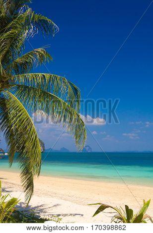 Coconut Getaway Jungle and Sea