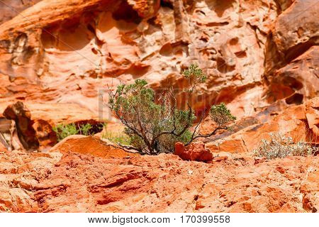 Green meets Orange in the Valley of Fire State Park in Nevada, USA
