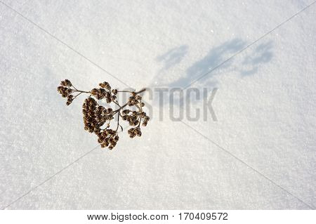 Coarse texture of the snow accented by a sliding sun light