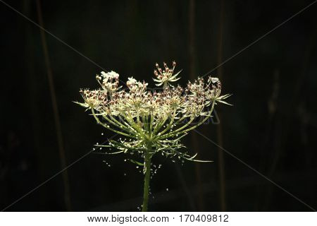 A white wide open flower with spiderwebs