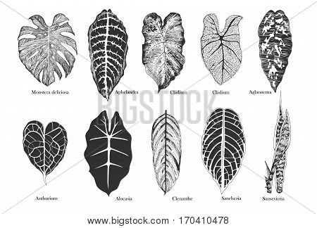 Black and white exotic leaves vector set.