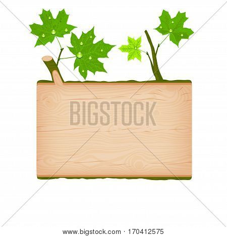 Natural textured maple wooden rectangular signboard with green leaves and water drops vector illustration