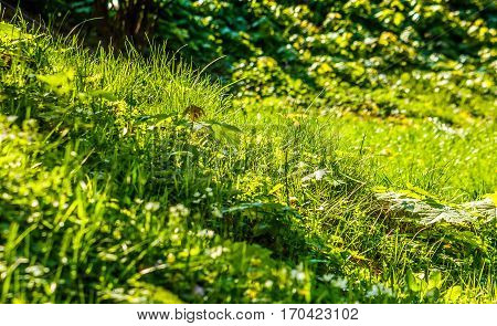 Grass On Forest Glade Closeup