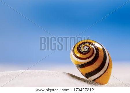bright polymita shell on white beach sand under the sun light, shallow dof