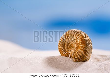 ammonite nautilus shell  on white beach  sand and blue seascape background