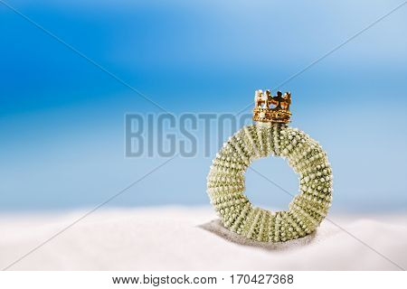 tiny urchin shell starfish with golden crown  ocean, on white sand beach