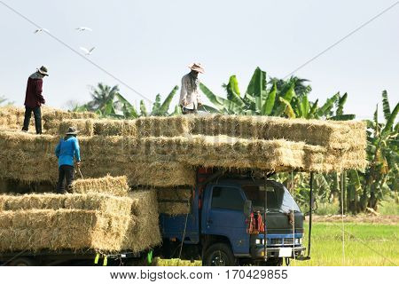 Farmers bring paddy straw up to the truck.