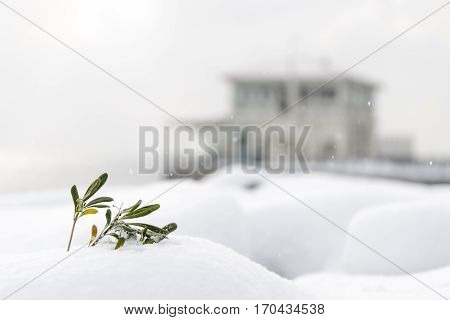 Plant Covered With Snow, Blurry Building At The Background