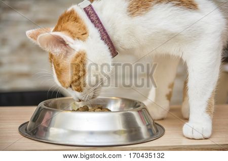 Beautiful Ginger Cat Eating From Metal Bowl