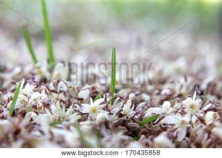 Soft Focus Forest floor with fallen flowers