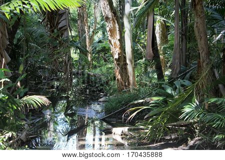 Australian Rain Forest with Creek 2