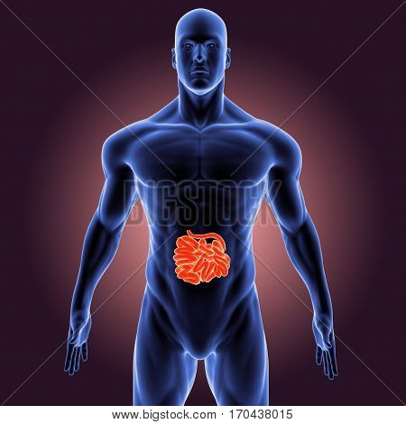 The small intestine or small bowel is the part of the human body organ