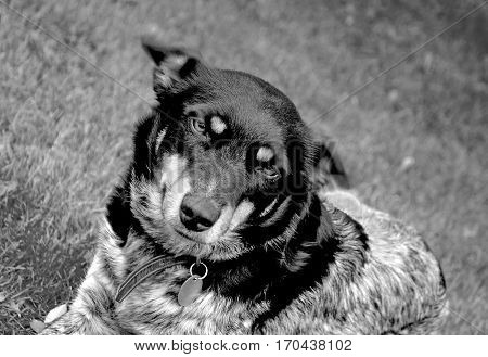Adorable looking dog in black and white