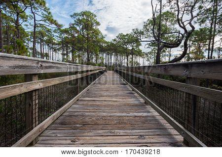 Wooden Walkway Over Marsh on St George Island