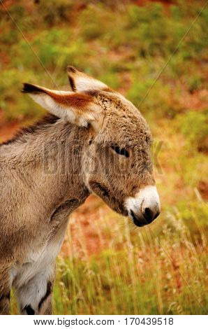 Portrait of a young burro in a field