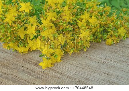Hypericum Perforatum On A Wooden Table