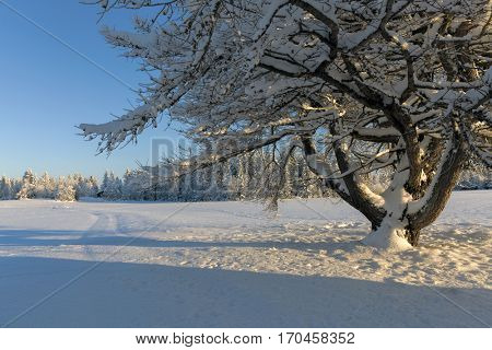 Beautiful winter landscape with snow cowered trees