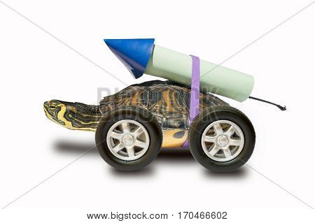 turtle waiting to use a rocket propulsion to go faster