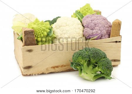 Romanesco broccoli, fresh cauliflower, purple cauliflower and green broccoli in a wooden crate on a white background
