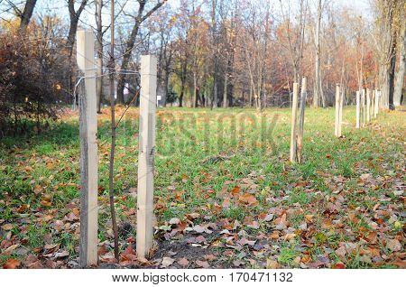 Fall planting of trees and shrubs. Planting a Trees Correctly with Two Stakes in Autumn. If your tree is still a sapling use a stake to help it grow for about the first year of its life.