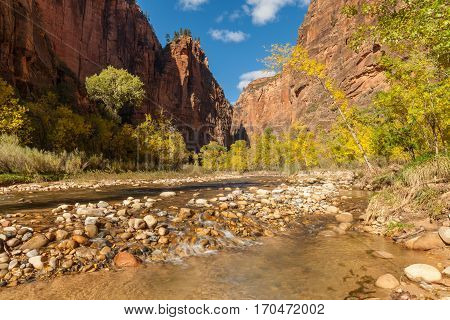 a scenic landscape of Zion National Park and the Virgin river in fall
