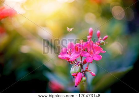 beautiful pink flowers and insect in a garden with blurry bokeh sunlight background.