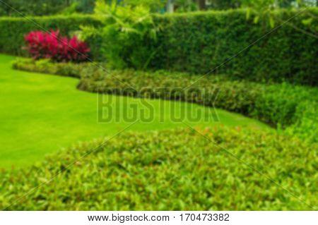 Blurred green lawn, backyard for a backdrop.