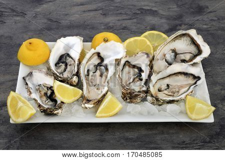 Oysters on crushed ice with lemon fruit on a porcelain plate on marble background.