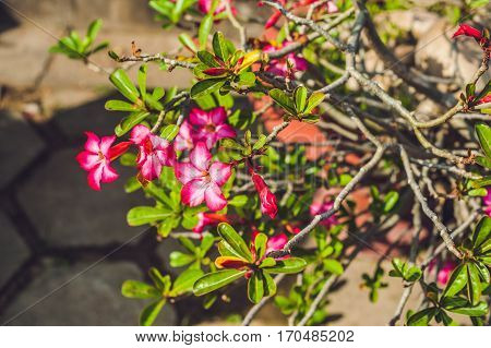 Fragrant Red Flower Tropical Flowers Concept