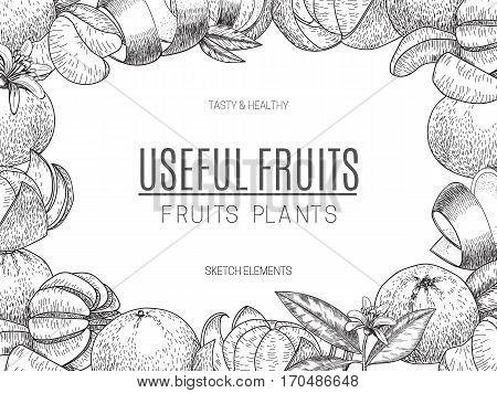 Vector design of hand drawn mandarins. Vintage sketch style illustration. Organic eco food. Whole , sliced pieces half, leaves and flowers leaf sketch. Fruit engraved style illustration.