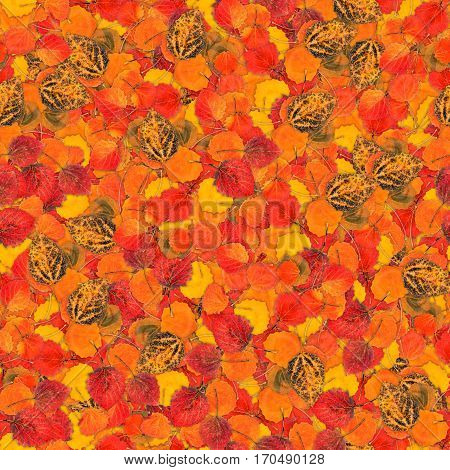 Seamless Background With Bright Multicolored Leaves Of Aspen