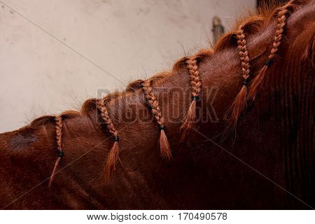 Close Up Of Chestnut Horse Mane With Plaits
