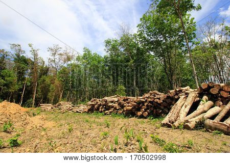 Deforestation. Logging of rain forest