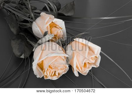 Roses - condolence card with deepest sympathy