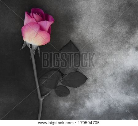 Flower on gray marble - condolence card with deepest sympathy