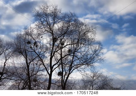 A tree without leaves in winter on a background of clouds against a blue sky
