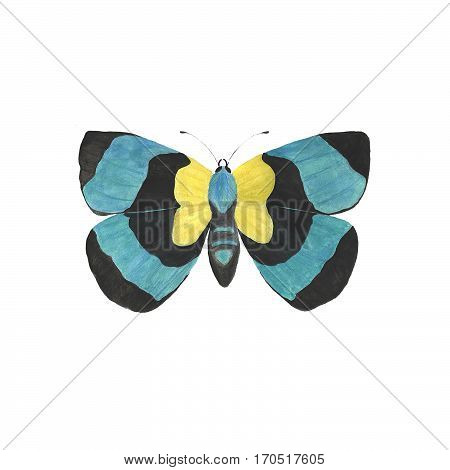 Watercolor butterfly isolated on white background. Aquarelle illustration.