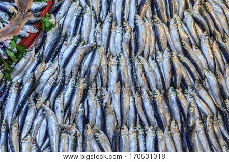 Pile of sardines fish lined up vertically.