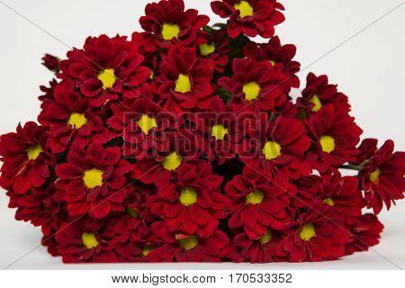 Chrysanthemum Merlot, burgundy chr bouquet, bordó krizantém csokor, krizi