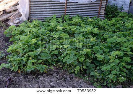 Seedlings In The Greenhouse. Growing Of Vegetables In Greenhouse