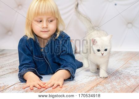 Girl lying down and watching a kitten. Kitten of the British breed is walking on the floor. Rare coloring - a silvery chinchilla. Blue eyes