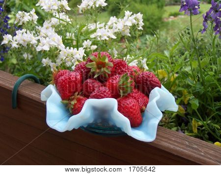 Strawberries In Blue Dish
