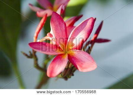 Beautiful tropical flowers create a festive mood anyone looking at them