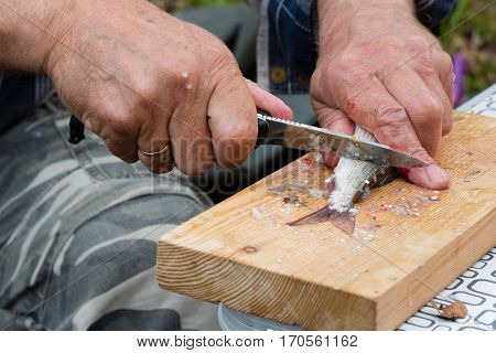 Fisherman cleans a knife fresh caught grayling outdoors