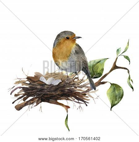 Watercolor robin sitting on nest with eggs. Hand painted illustration with bird and branch of wood isolated on white background. Nature print for design