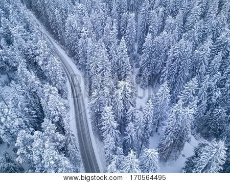 Winter Snowy Road in the Forest night bird's eye view
