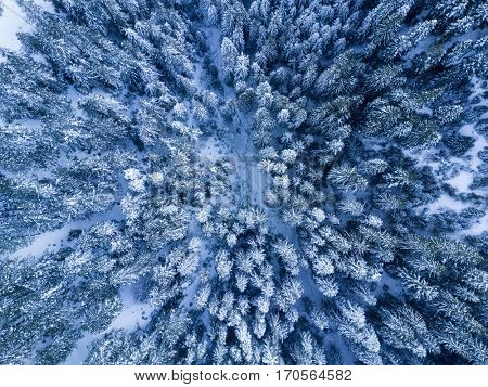 Snowy cold winter forest aerial bird's eye view